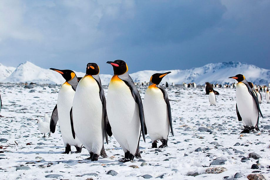 qué ver en la Antártida