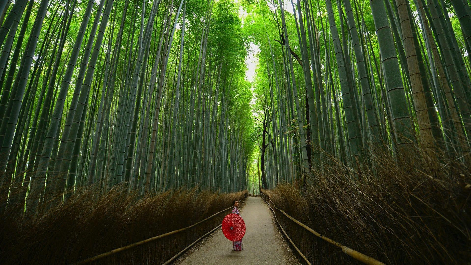 Entrevista Wander on World | Rojo Cangrejo Blog de Viajes