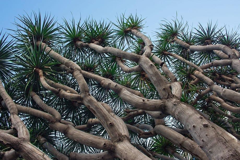 la palma canarias