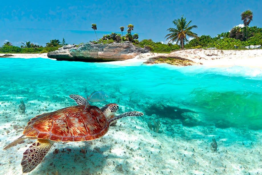 Dónde bucear en Riviera Maya