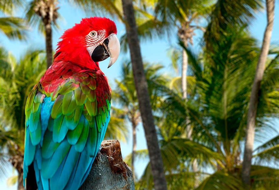 por qué visitar República Dominicana