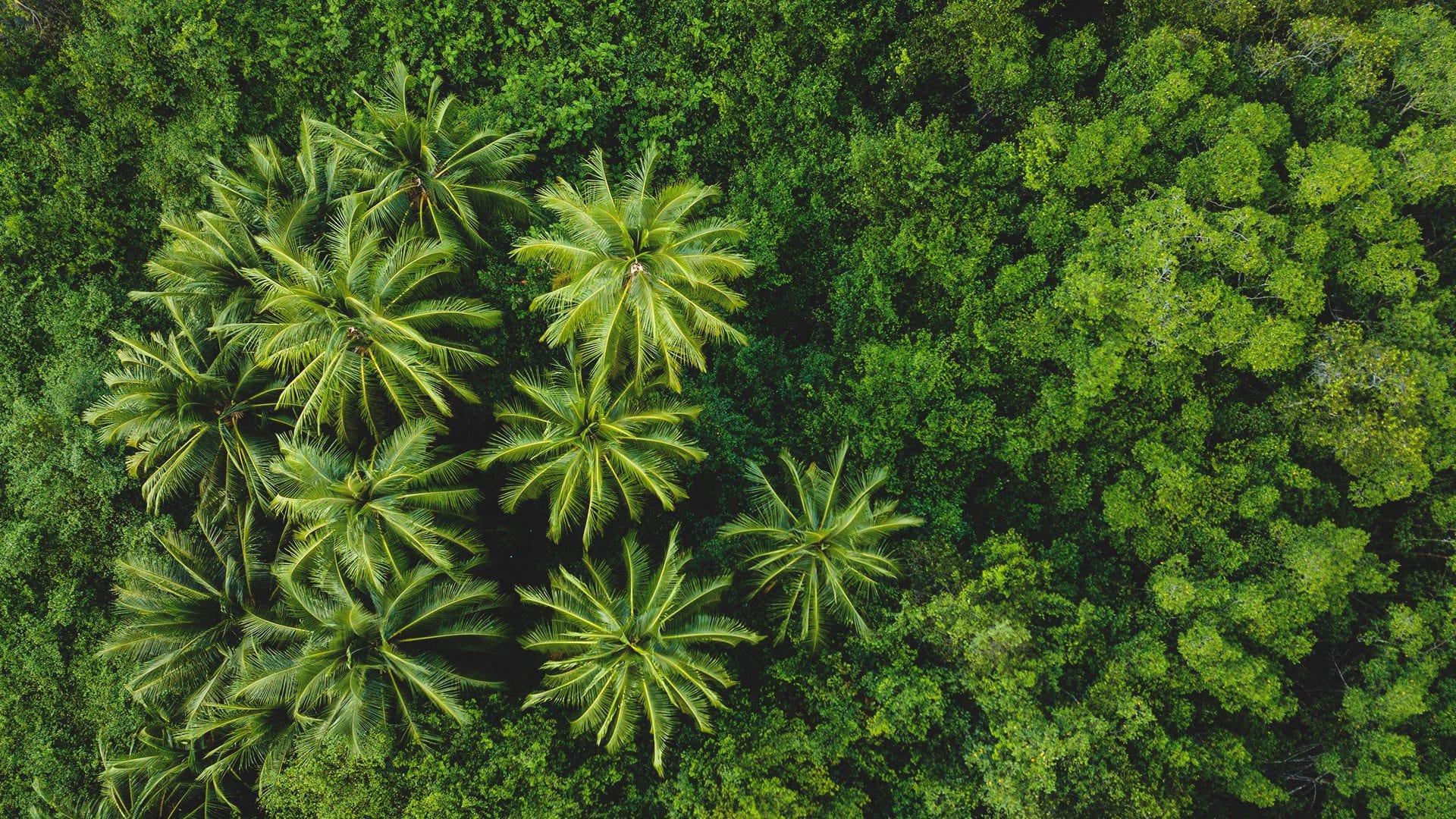 Qué hacer en Costa Rica | Rojo Cangrejo Blog de Viajes