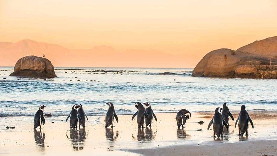 ¿Qué ver y hacer Ciudad del Cabo? | Rojo Cangrejo Blog de viajes