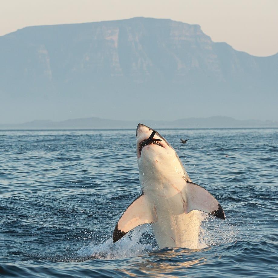 ¿Qué visitar cerca de Ciudad del Cabo? | Rojo Cangrejo Blog de viajes