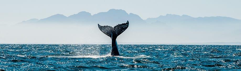ballenas en Sudáfrica | Rojo Cangrejo Blog de viajes