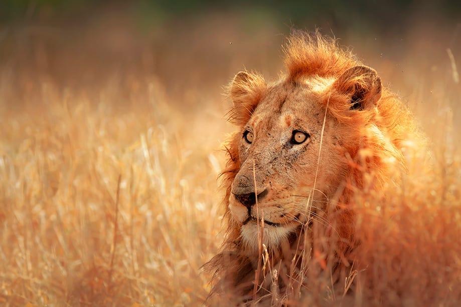 Safari cerca de Ciudad del Cabo | Rojo Cangrejo Blog de viajes