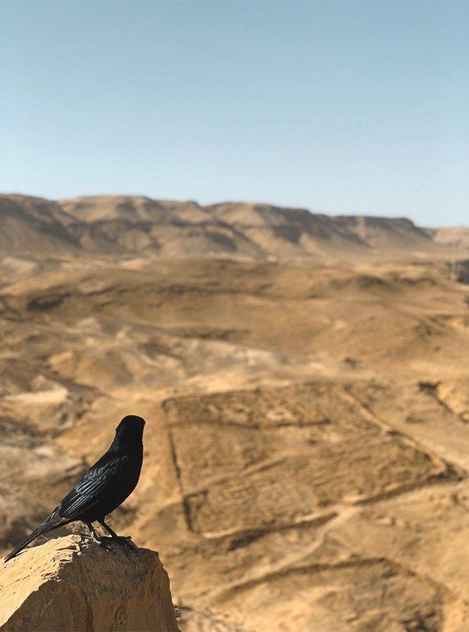 cómo llegar a Masada desde Jerusalén | Rojo Cangrejo