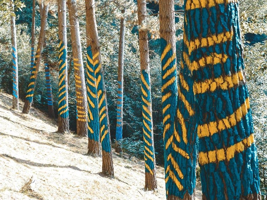 Cómo visitar el bosque de Oma | Rojo Cangrejo Blog de Viajes