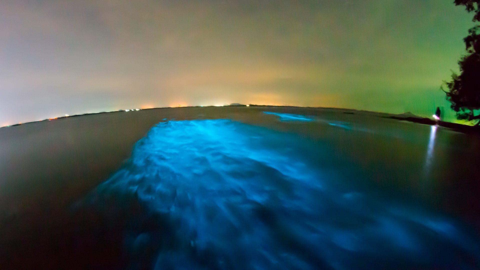 Laguna Luminosa en Jamaica