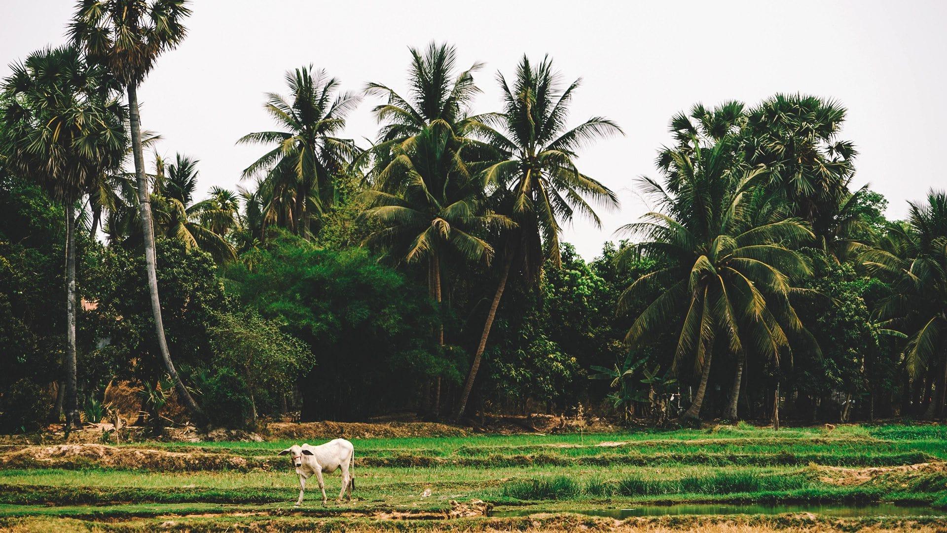 Cómo ir a Siem Reap | Rojo Cangrejo Blog de Viajes