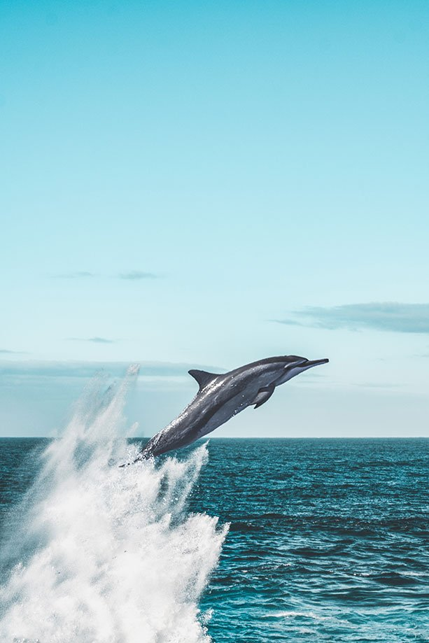 dónde ver delfines en Gibraltar | Rojo Cangrejo Blog de Viajes