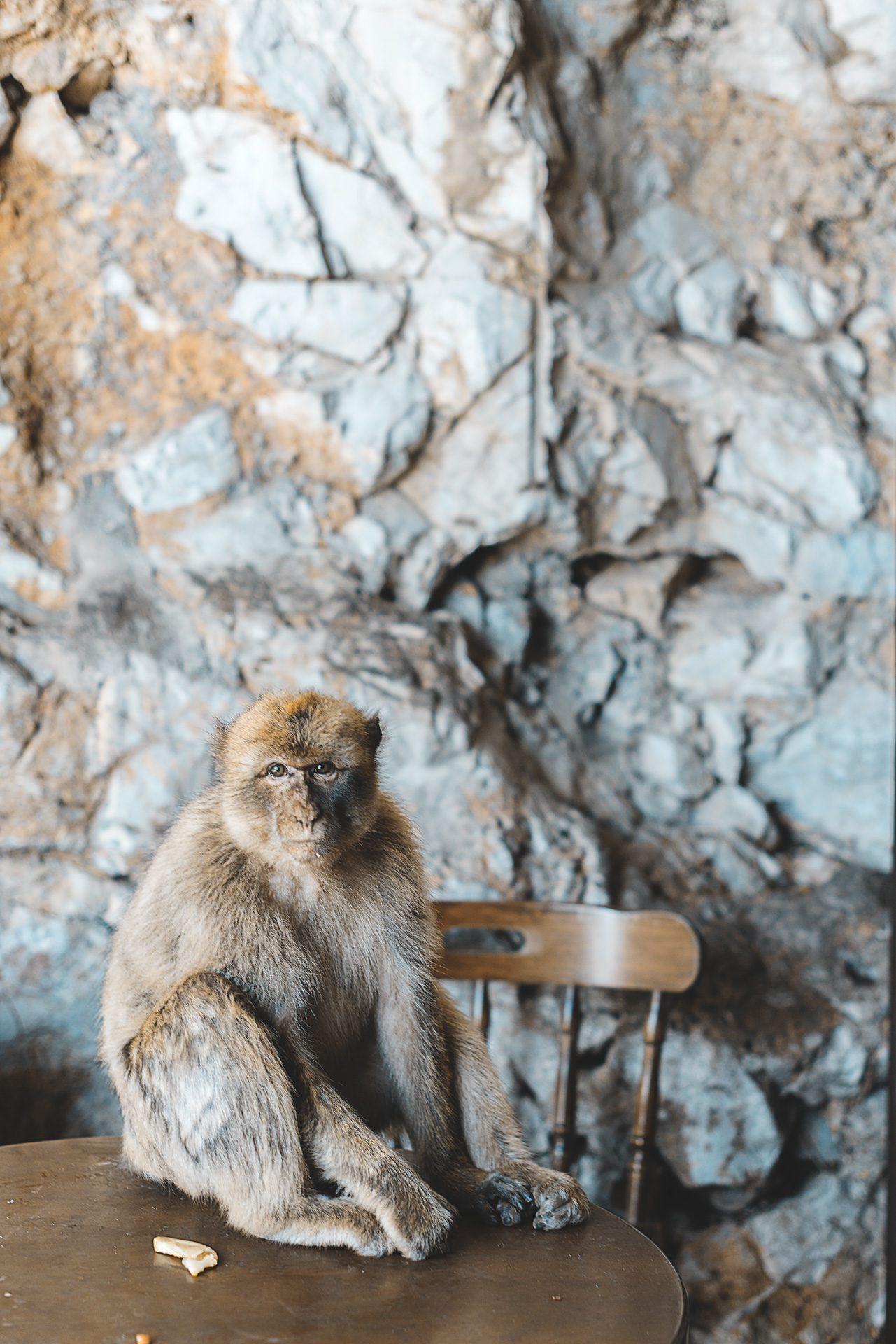 Gibraltar cosas que ver | Rojo Cangrejo Blog de Viajes
