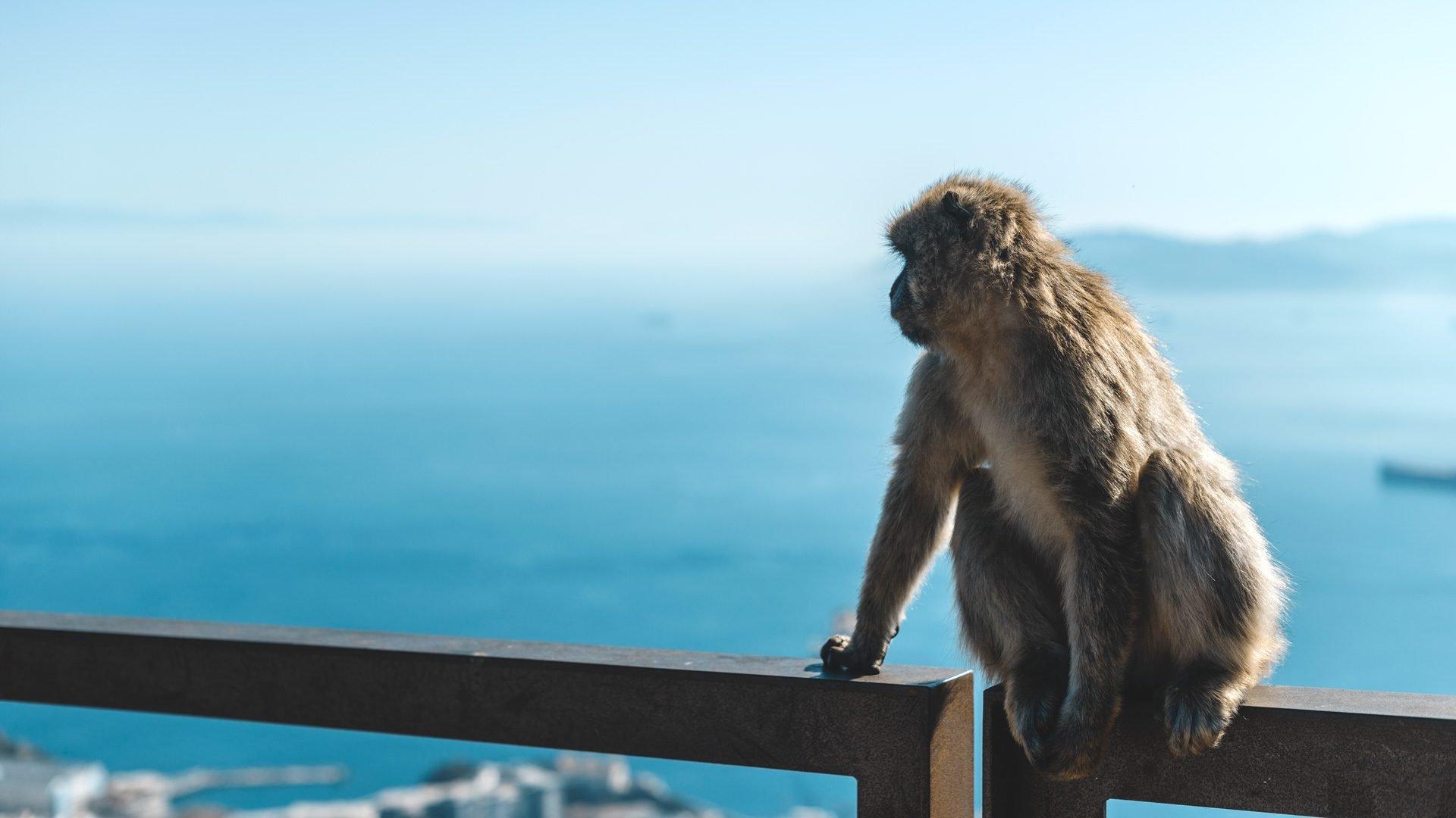 Gibraltar historia | Rojo Cangrejo Blog de Viajes