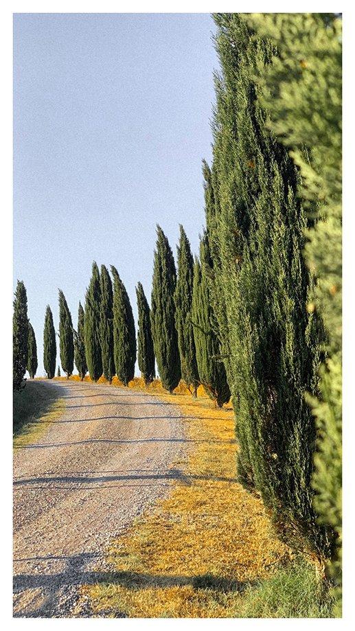 carretera cipreses toscana | Rojo Cangrejo Blog de Viajes